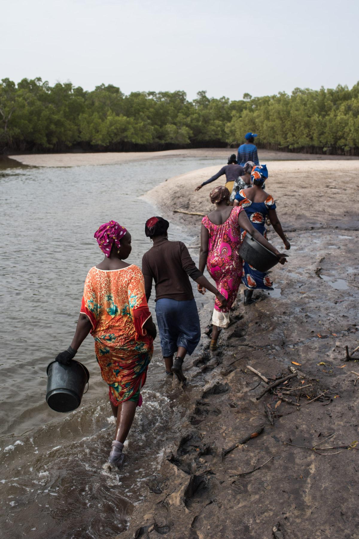 Au Sénégal, les femmes du delta du Saloum sont au chevet de leur mangrove