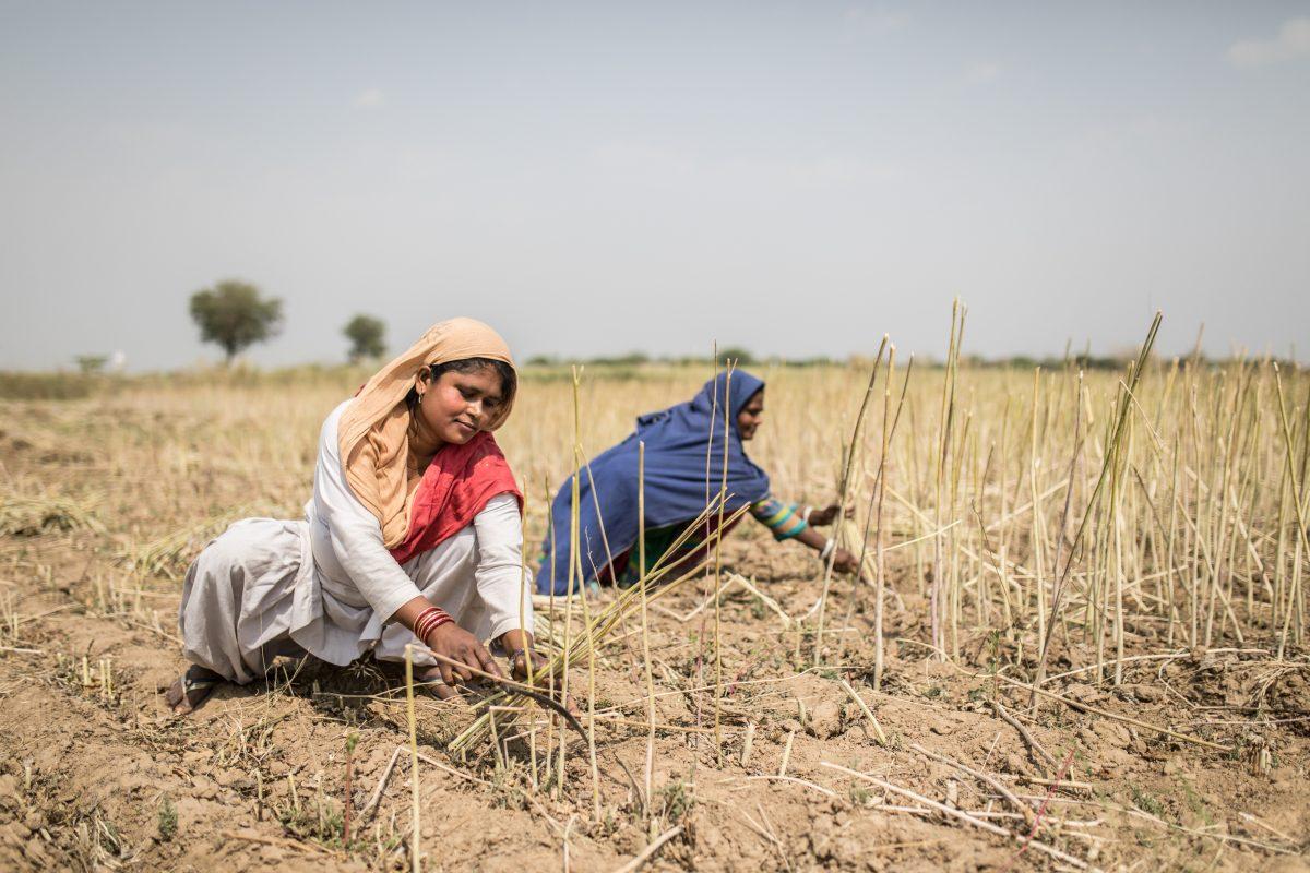 Inde: les victimes du «trafic d'épouses» veulent se faire entendre